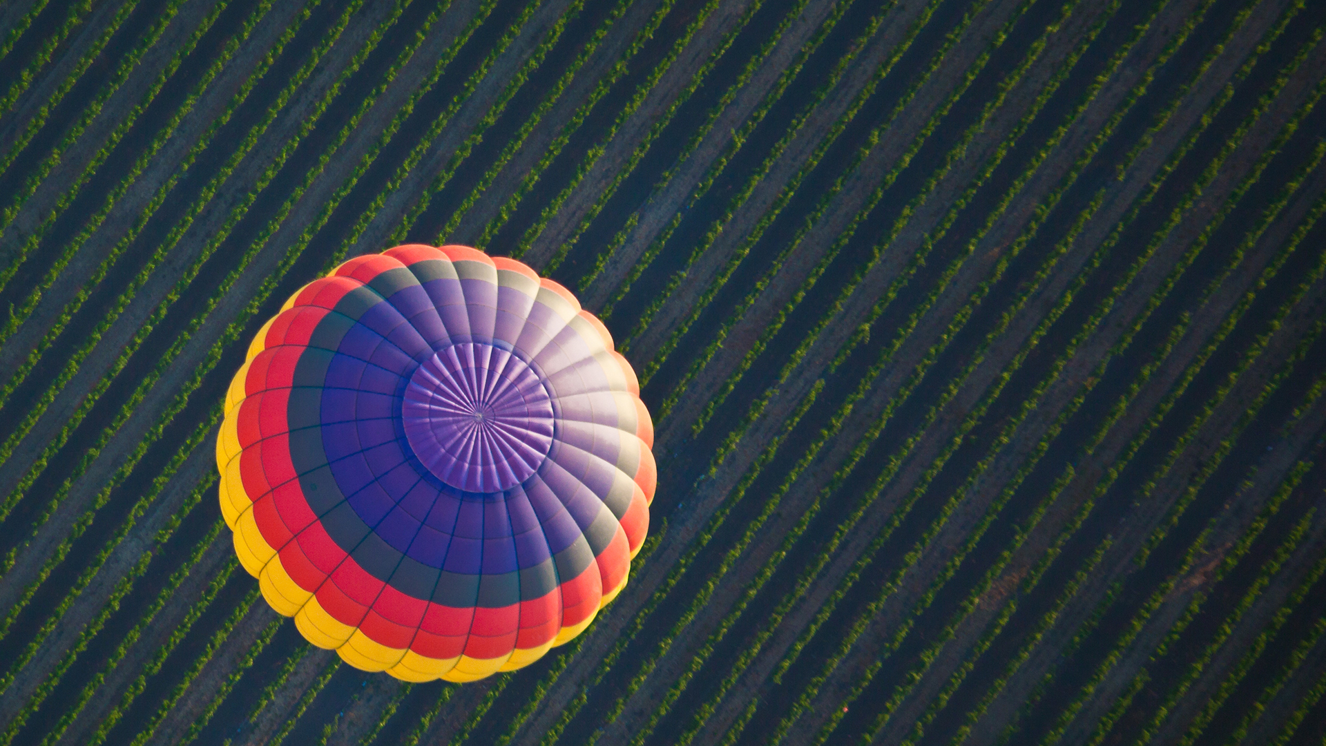 Hot air balloon over a vineyard in Yountville